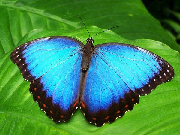 6. butterfly.jpg