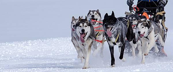 Dog team.jpg