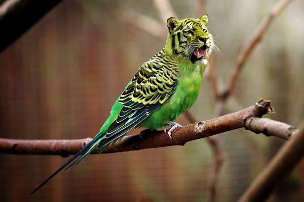 tiger-bird.jpg
