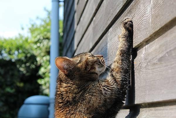 Cat scratching.jpg